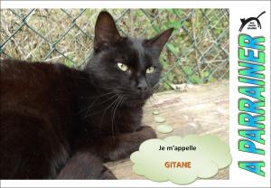 Nouveau-chats-eclopes Mini_711725Gitane
