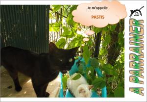 Nouveau-chats-eclopes Mini_721117Pastis