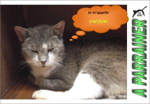 Nouveau-chats-eclopes Mini_763926Papoum