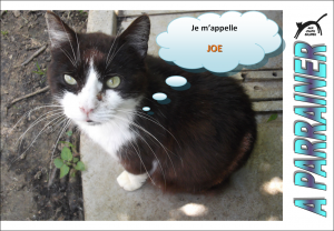Nouveau-chats-eclopes Mini_766945Joe