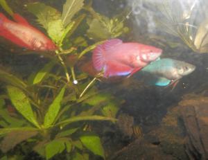 aquarium boule - Page 2 Mini_7779602714