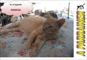 Nouveau-chats-eclopes Mini_778439Mimosa
