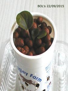 De la plantation à la floraison Mini_778710Bolshydro01