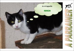 Nouveau-chats-eclopes Mini_780420Ninon