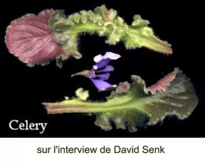 Article sur David Senk Mini_804429CelerySenk