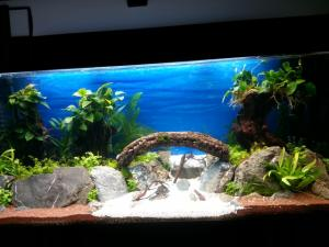 mon 240 L aquascaping Mini_82690620140930183637