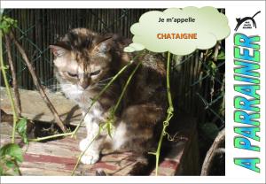 Nouveau-chats-eclopes Mini_863854Chataigne