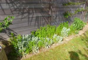 quelques plantouilles au jardin, en ce moment ! Mini_887926852