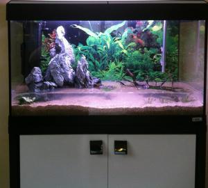 Aquarium 125L - asiatique- sable et déponit Mini_890918IMG1071