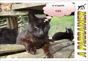 Nouveau-chats-eclopes Mini_904708Clo