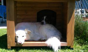 Nouvelle maison pour Coyote et Jessy! Mini_943408IMAG0377