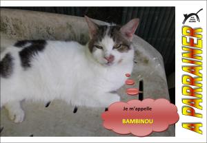 Nouveau-chats-eclopes Mini_949850Bambinou