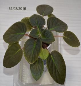 De la plantation à la floraison Mini_954136Bolshydro08