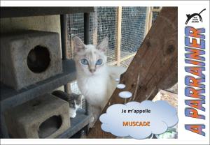 Nouveau-chats-eclopes Mini_957948Muscade