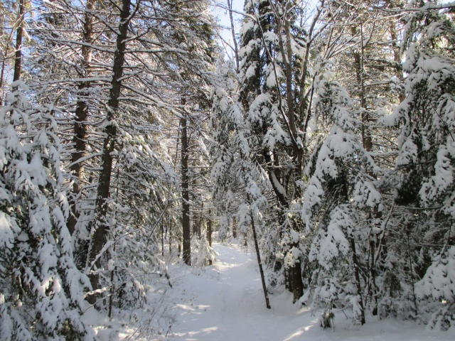 l'hiver est bien installé 111193IMG0307