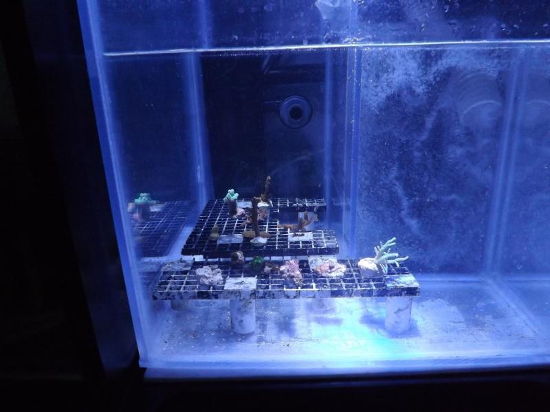 Astra47's Reef >Rsm250 noir - Page 2 126127DSCF1905