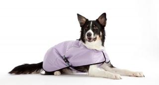 OligoDog, boutique en ligne de compléments et accessoires pour chiens  130814574