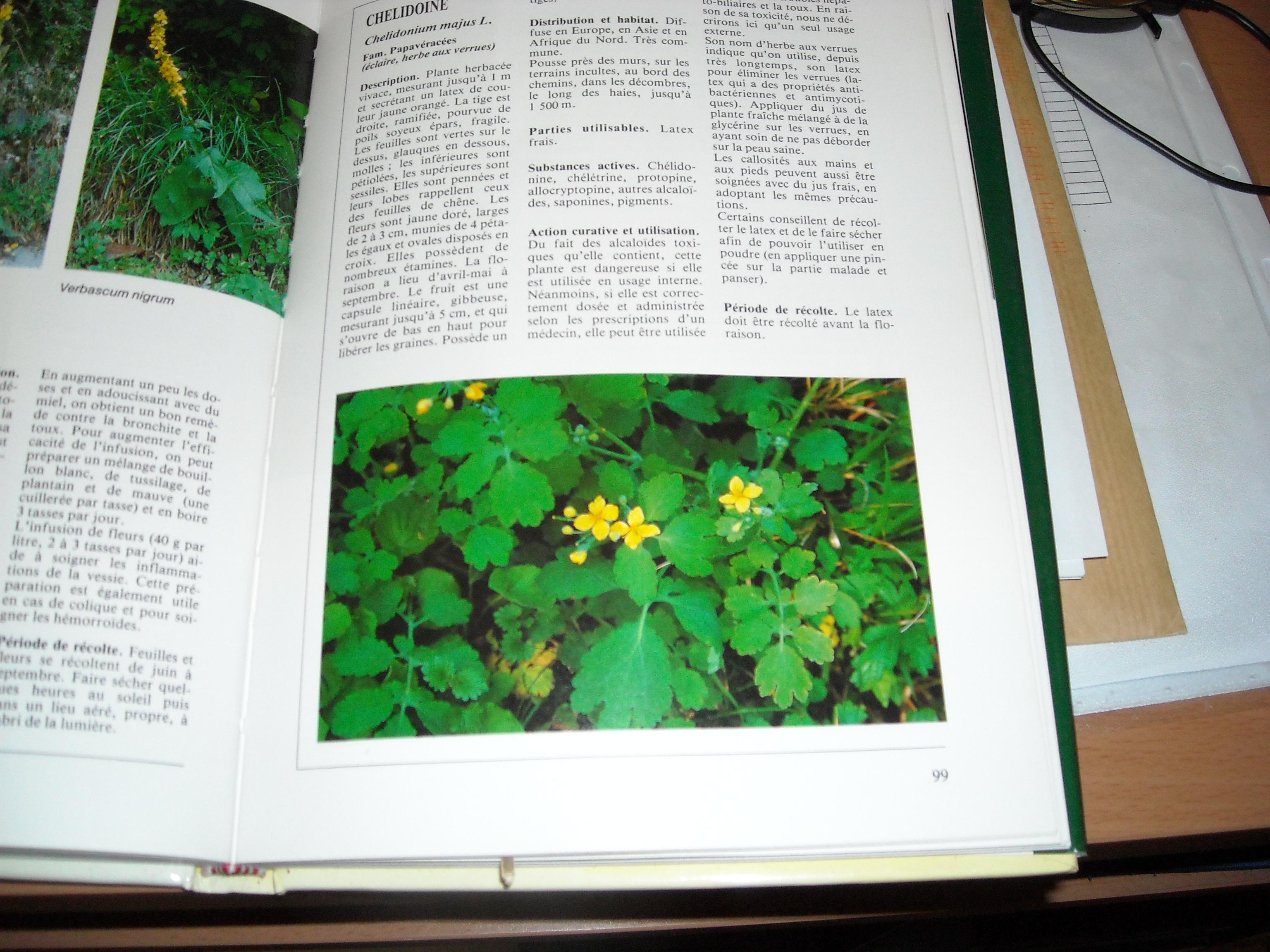 chélidoine ou herbe a verrues 135428008