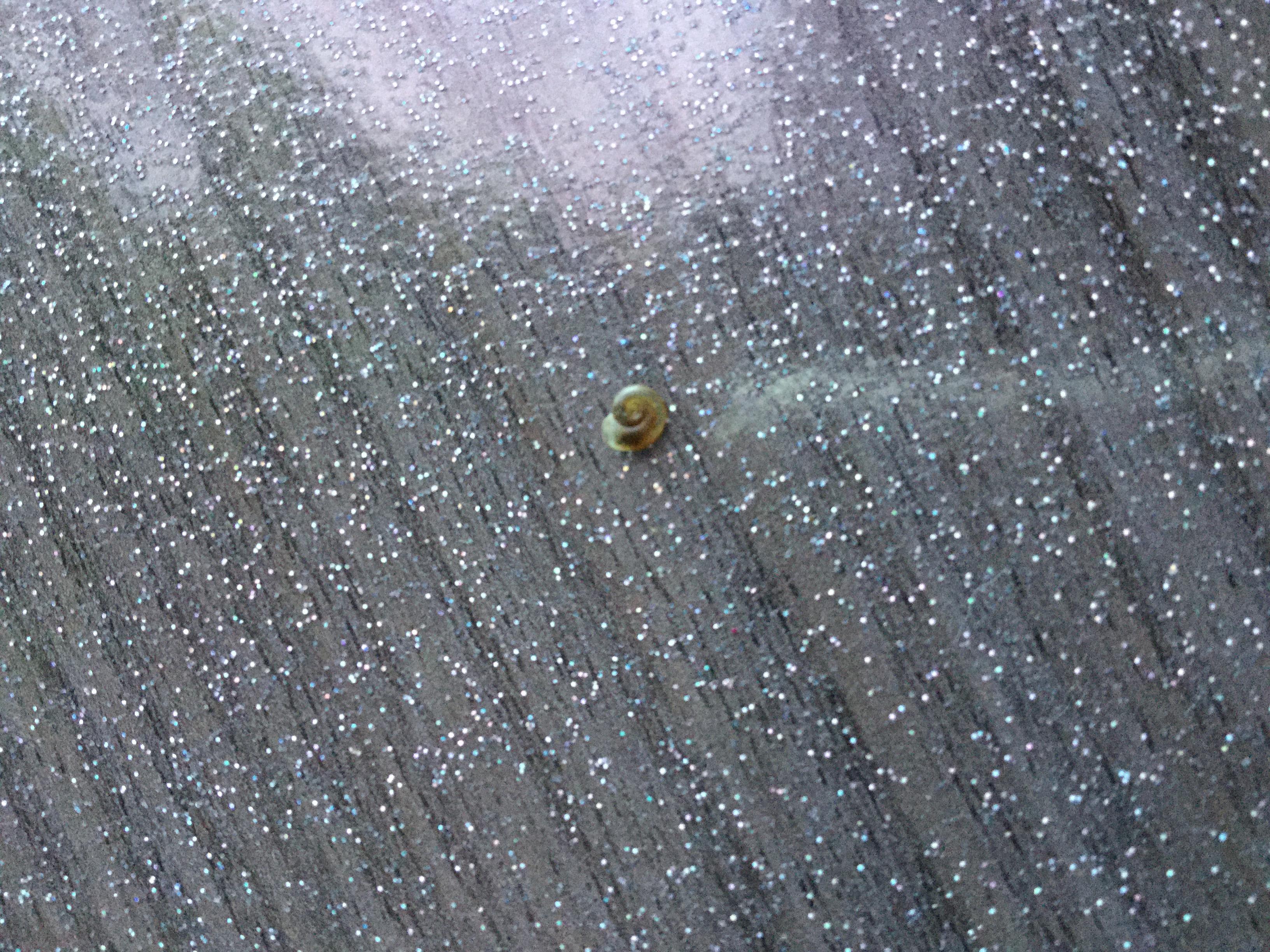Identification escargots (planorbes ?) 137429IMG0904