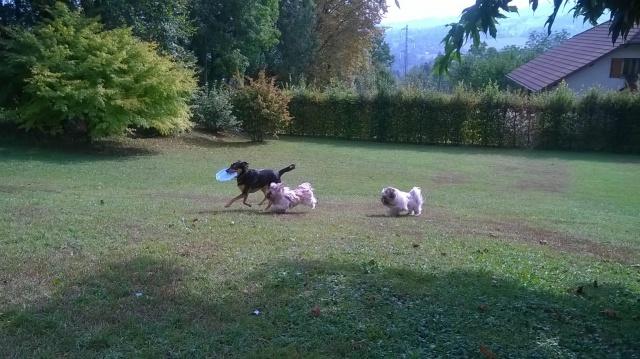 Kami, chien de randonnée - Page 21 144499WP20160922003