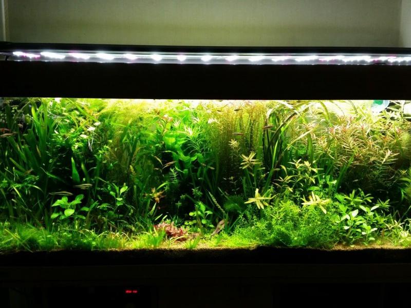 Mes (plus) de 60 plantes dans mon 240 litres - Page 5 14690820141104192327