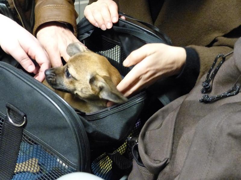 Betty, mini chien, soeur de Dixie 151465P1020928