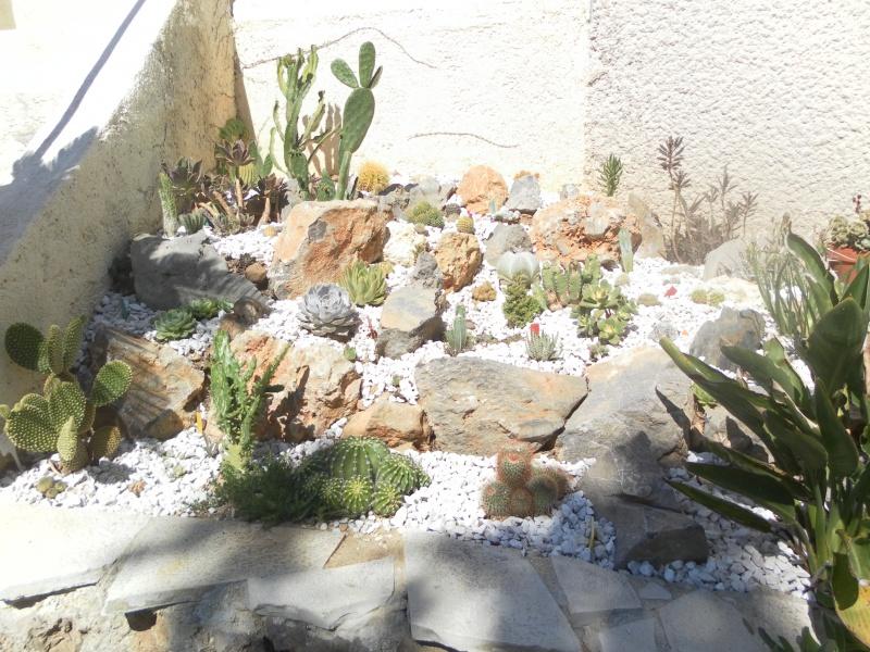 mes rocailles 164939SAM2303