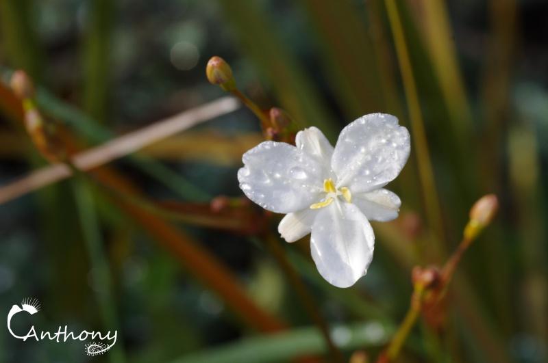 Fleur de graminée 165825IMGP5056