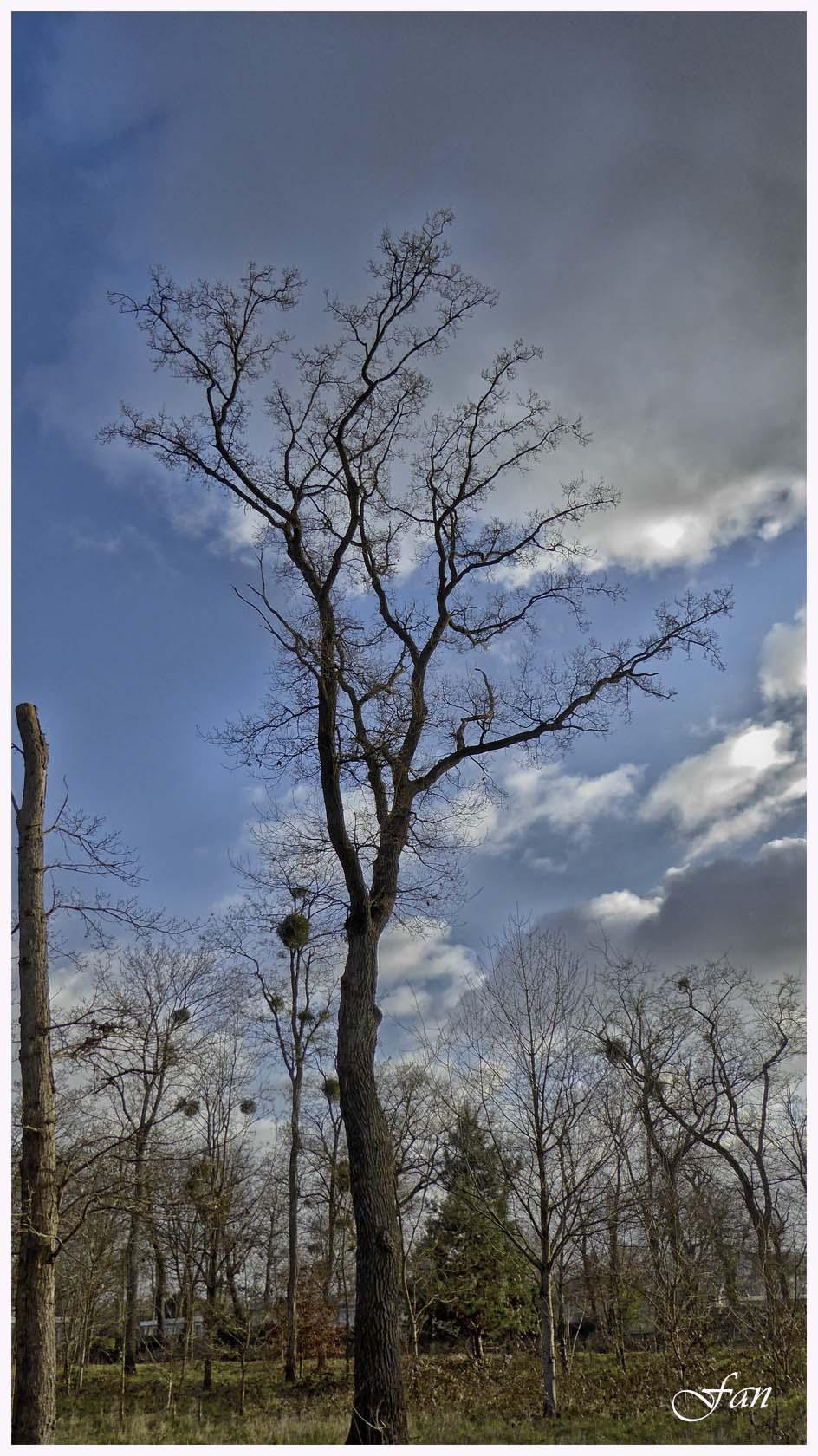 Paysage et nature des yvelines - Page 2 171985P1010933bis