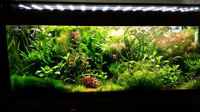Mes (plus) de 60 plantes dans mon 240 litres - Page 6 180752201412071937431