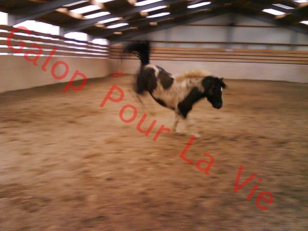 LOONY -  ONC poney né en 2001 - Adopté en juin 2011 par Carole 185269DSC01122