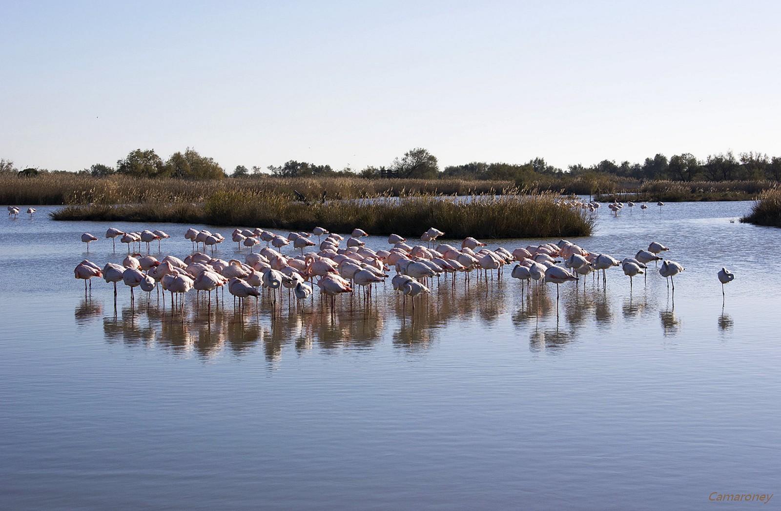 Parc ornithologique du pont de Gau  186025DSC53771600