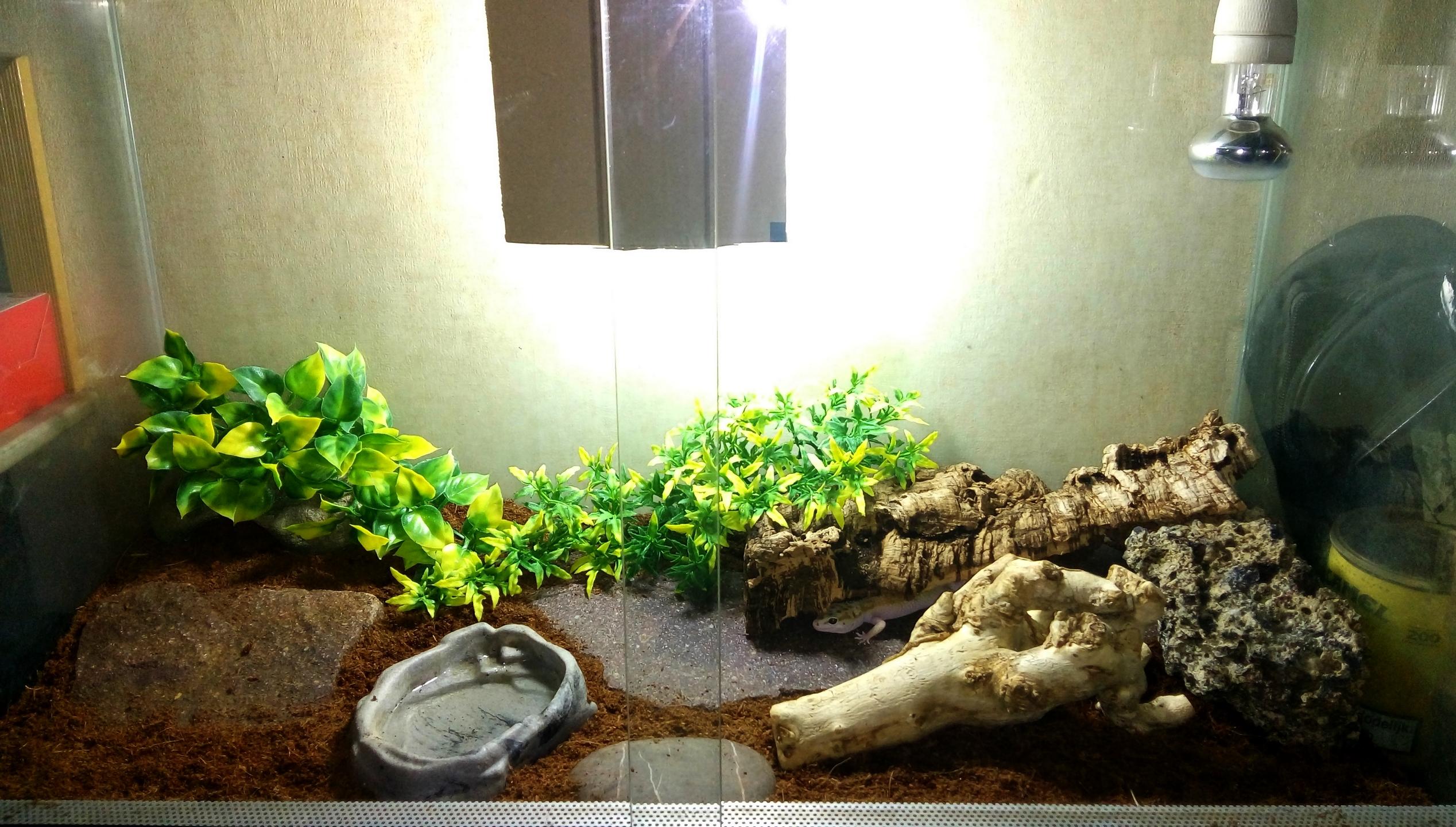 Quelques terrariums pour geckos léopards 211994IMG20160827201147