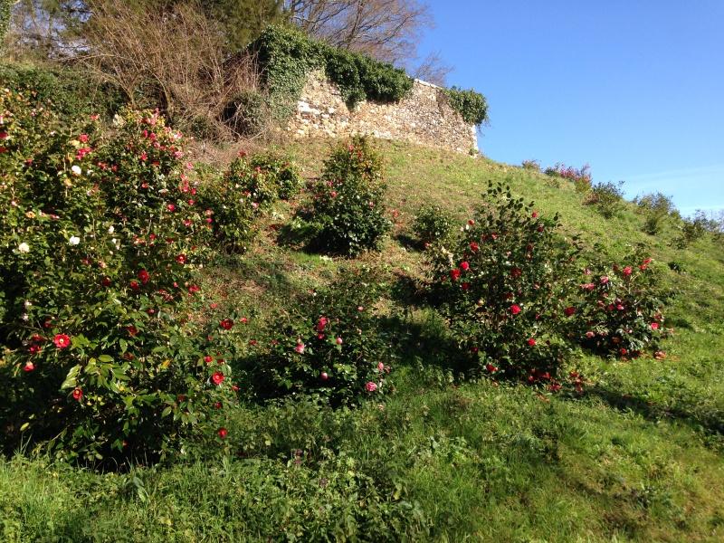 (40) Plantarium et chemin de ronde - Gaujacq 213780IMG0503