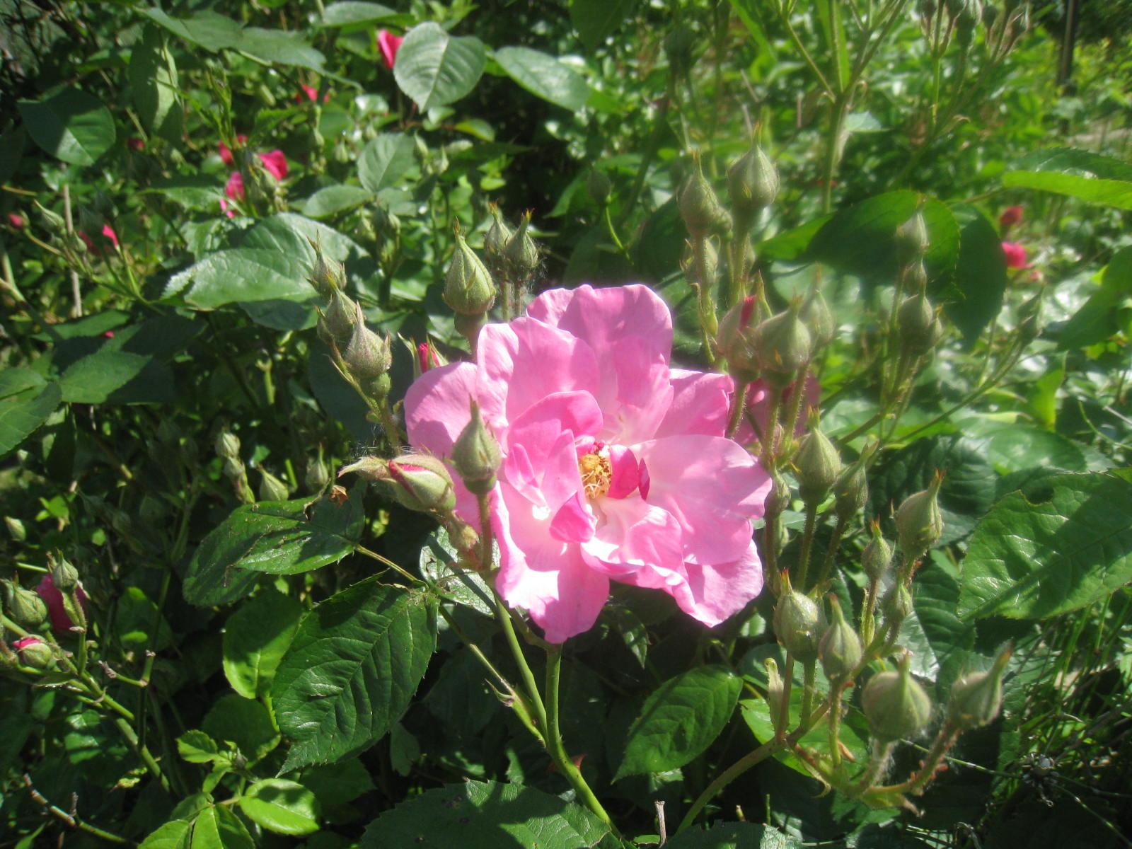 en fleurs chez moi - Page 2 216149005
