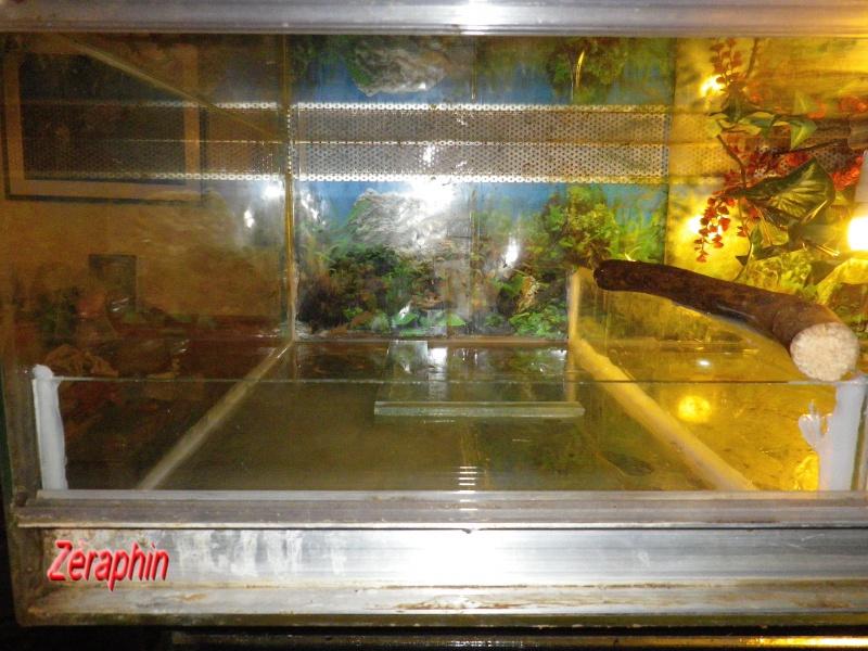 Aménagement d'un aqua-terrarium pour espèce semi-aquatique 22248804janvier20123