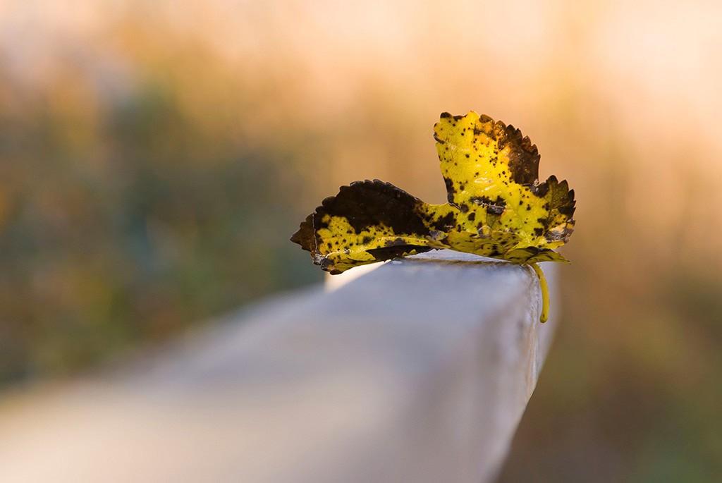 """Concours photo du mois d'octobre 2016 - Thème """"Une feuille d'automne"""" (terminé) 224030Photo04"""