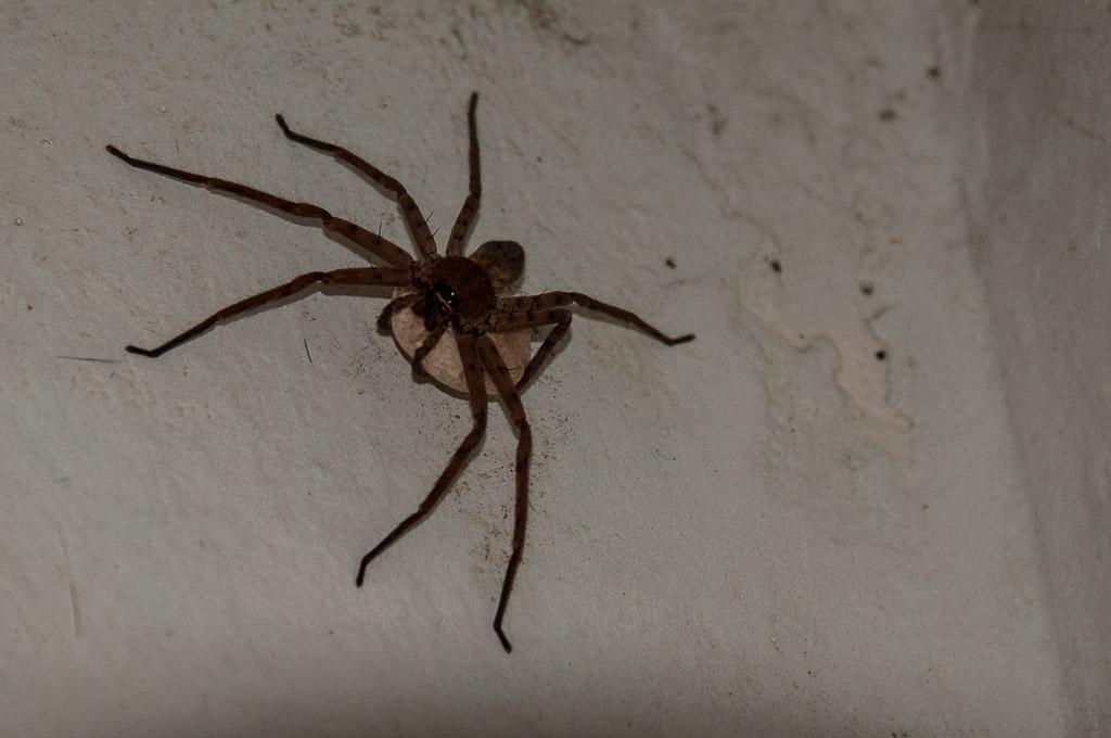 (FIL OUVERT à tous) vous aimez les araignées? 224702Galapagos187