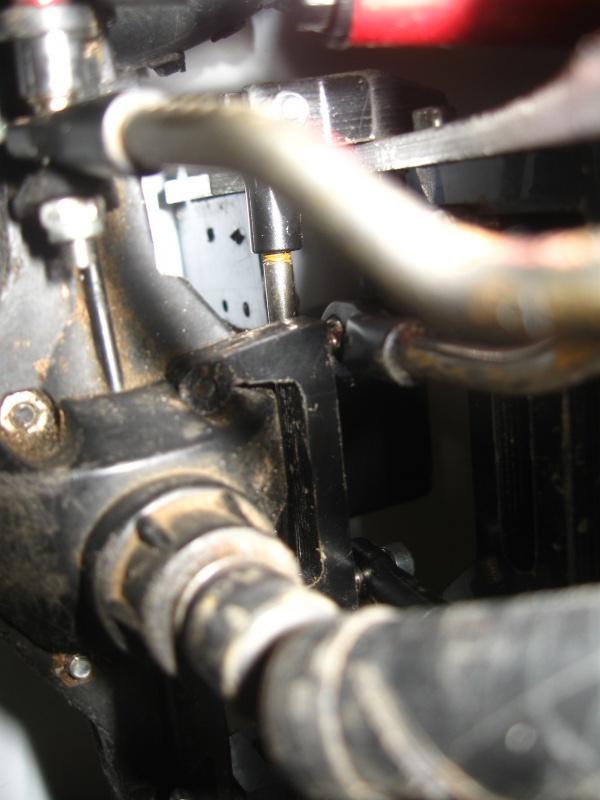 Dingo Classe 2 226479IMG3600