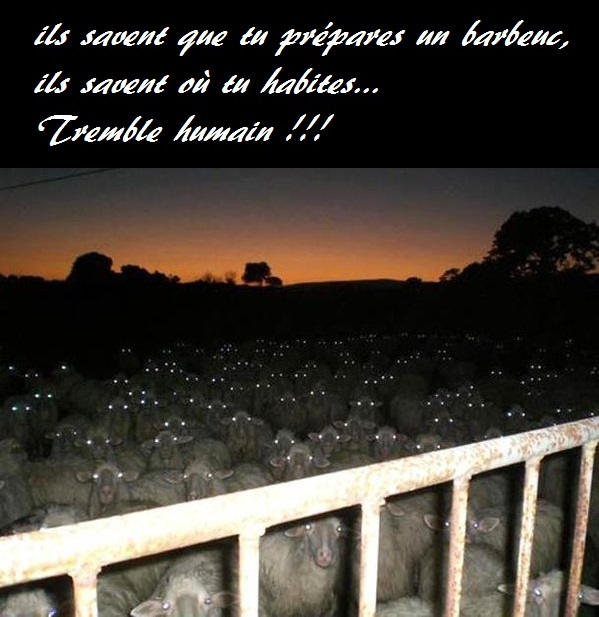 HUMOUR - blagues - Page 3 235693Cip3FFWYAAXKiR