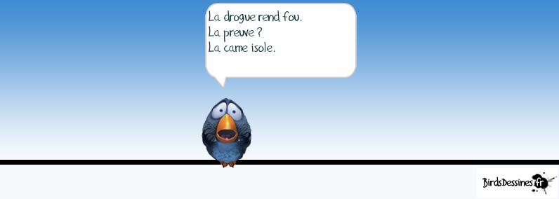 Les Birds Dessinés - Page 2 2362978803