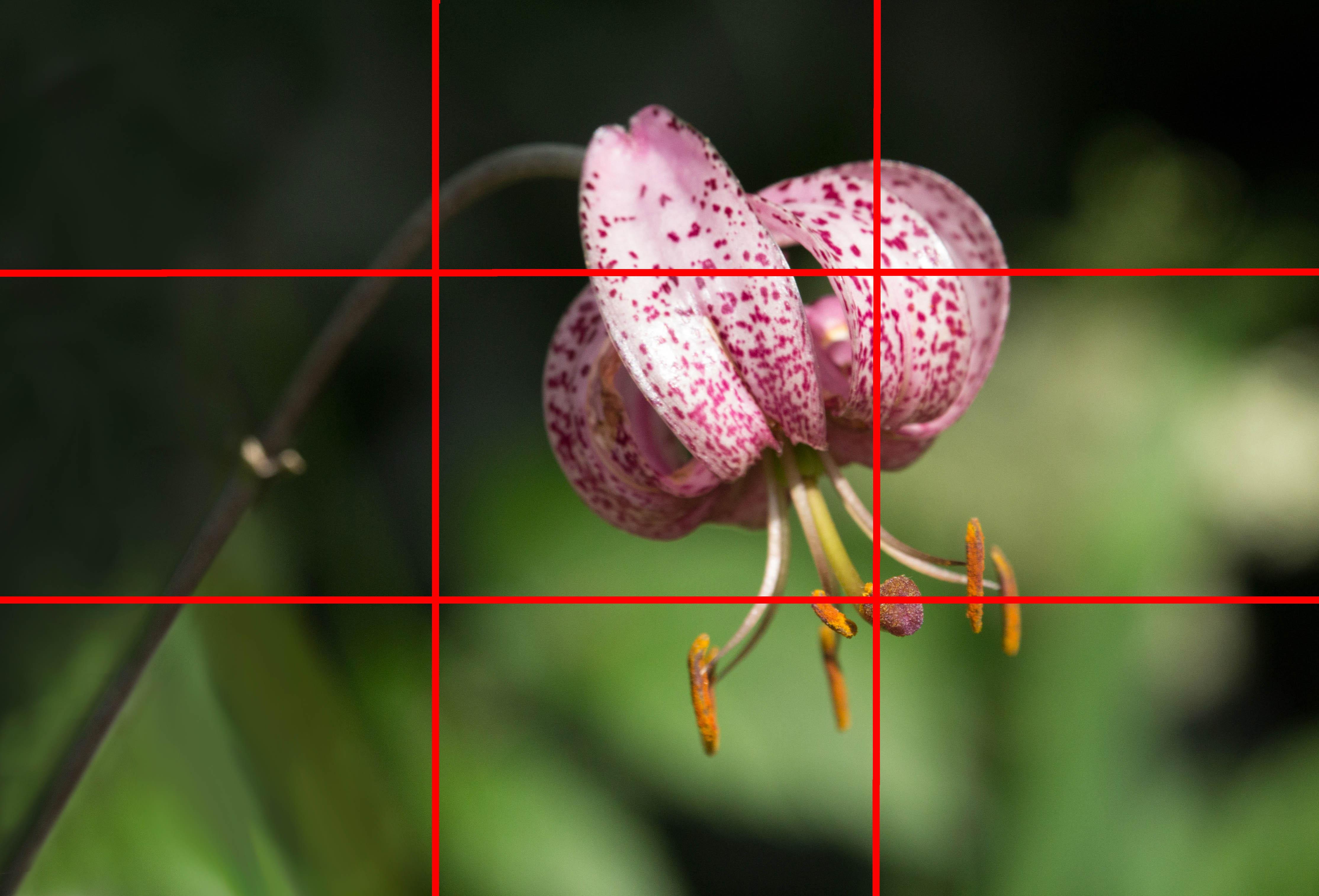 une petite fleur bien sympa  247899TIERS