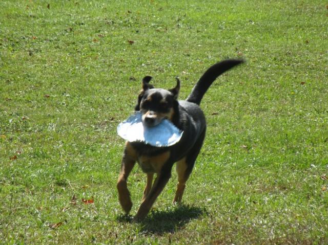 Kami, chien de randonnée - Page 21 249864IMG4804