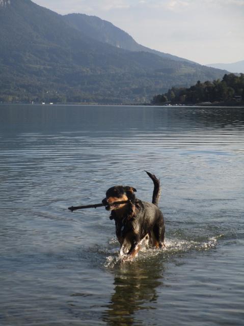 Kami, chien de randonnée - Page 21 257307IMG4816