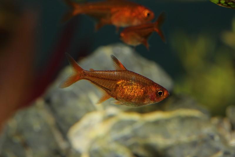 Mes bacs, une passion: l'aquariophilie!! 265667IMG9953