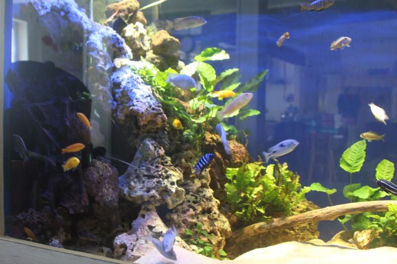 aquarium de 2000L en bois - Page 2 268267IMG0015