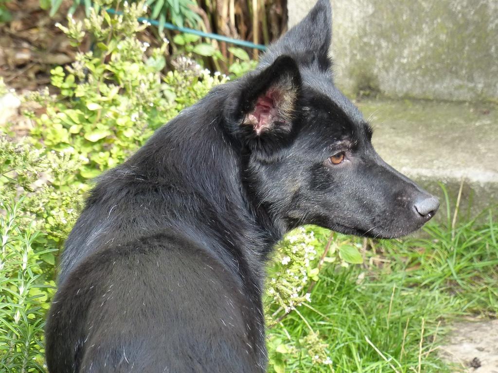 > Mika, un amour de petite chienne, née en mai 2011 - Adoptée 287668P1000055