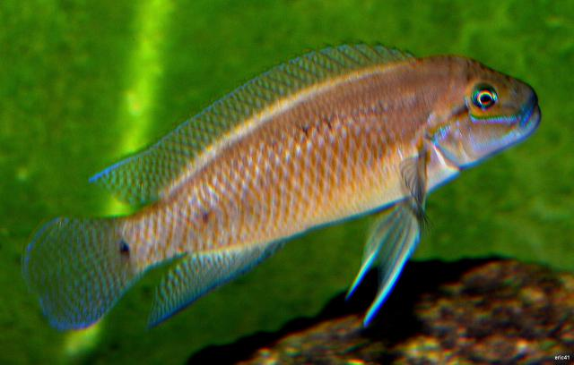 [ORCHIES 5 juin 2011] Tous poissons : j'amène, je recherche... - Page 3 289350mle2