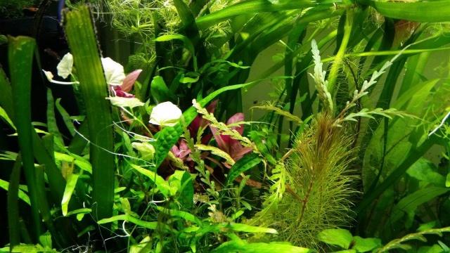 Mes (plus) de 60 plantes dans mon 240 litres - Page 5 29049120141125060010