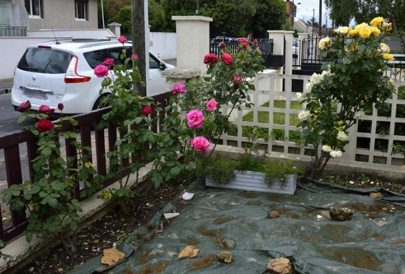 tous ces rosiers que l'on aime - floraisons - Page 2 292236roses6